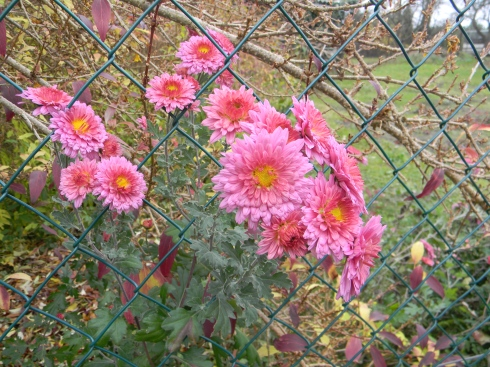 Peter discovered these flowers near the fence.