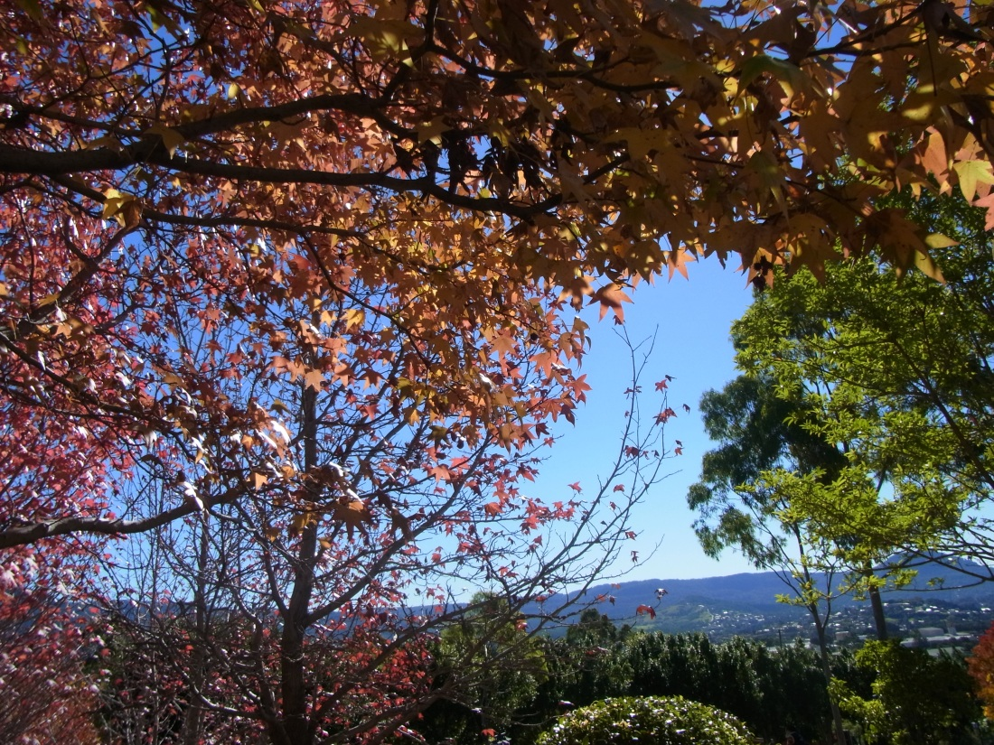 Beautiful Illawarra in Autumn