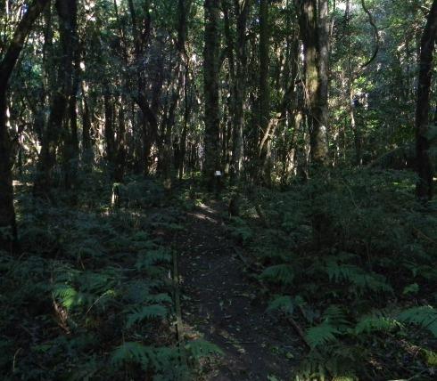 Robertson Nature Reserve