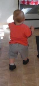 Lucas exploring the kitchen.