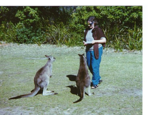 There were always some friendly kangaroos around at Sussex Inlet.