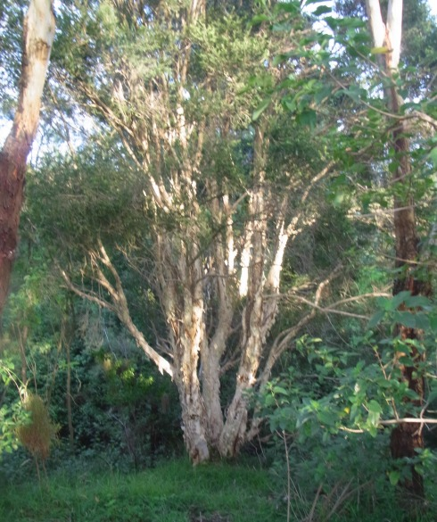 A tree in the vicinity of the creek
