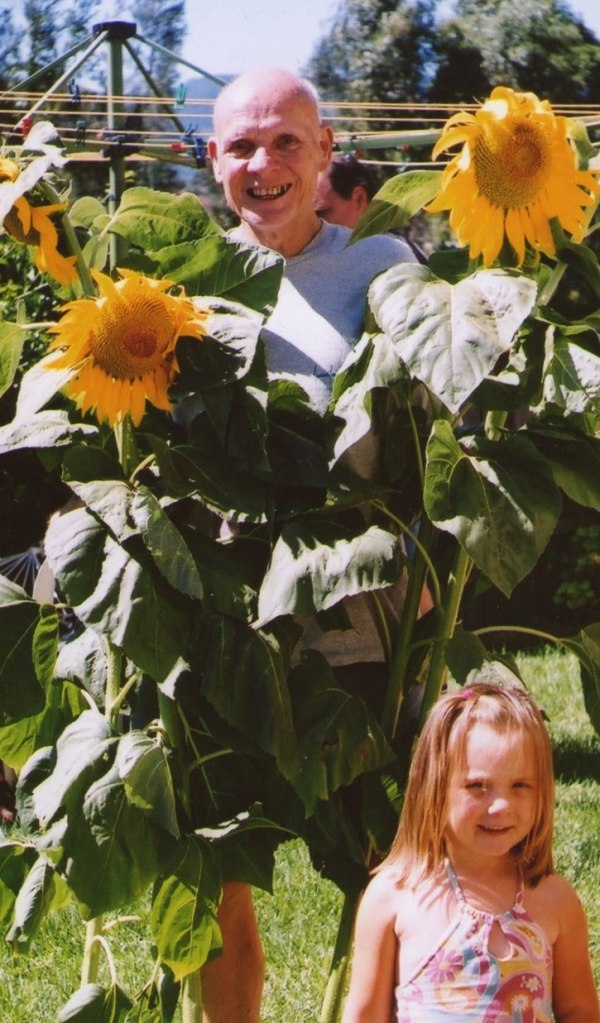 This photo was taken around Christmas  2OOO. Krystal wonders what Granddad is going to do with these sunflowers that grew in his garden.
