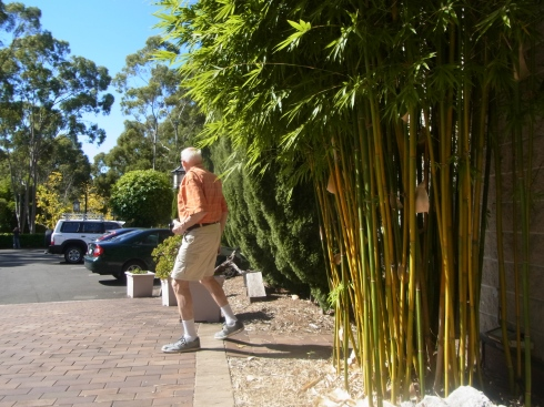 Here I caught Peter as he is walking near some tall bamboo plants at Nan Tien Temple.