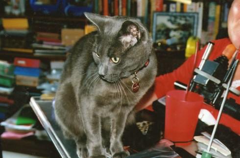 Blackie, the kitten, grew into this.
