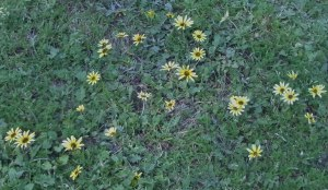 There were a lot of these flowers in the grass where we were walking.