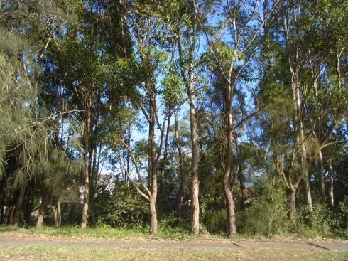 The 'Bush' along the Creek