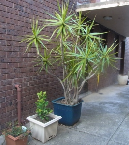 These are Martin's plants near the entrance door to his unit.