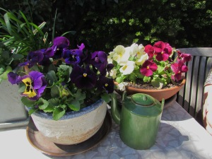 Helvi's flowers