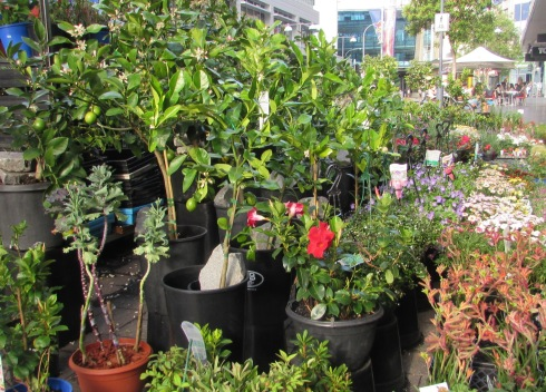 Plants for sale in the Mall.
