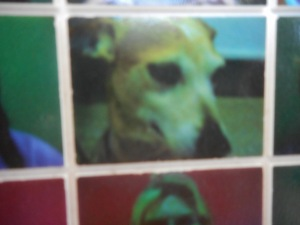 This is a picture of Gaby's dog.