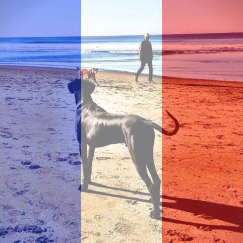 My social media profile photo changed to show solidarity with the recent attacks in Paris, France. (c) Likeitis