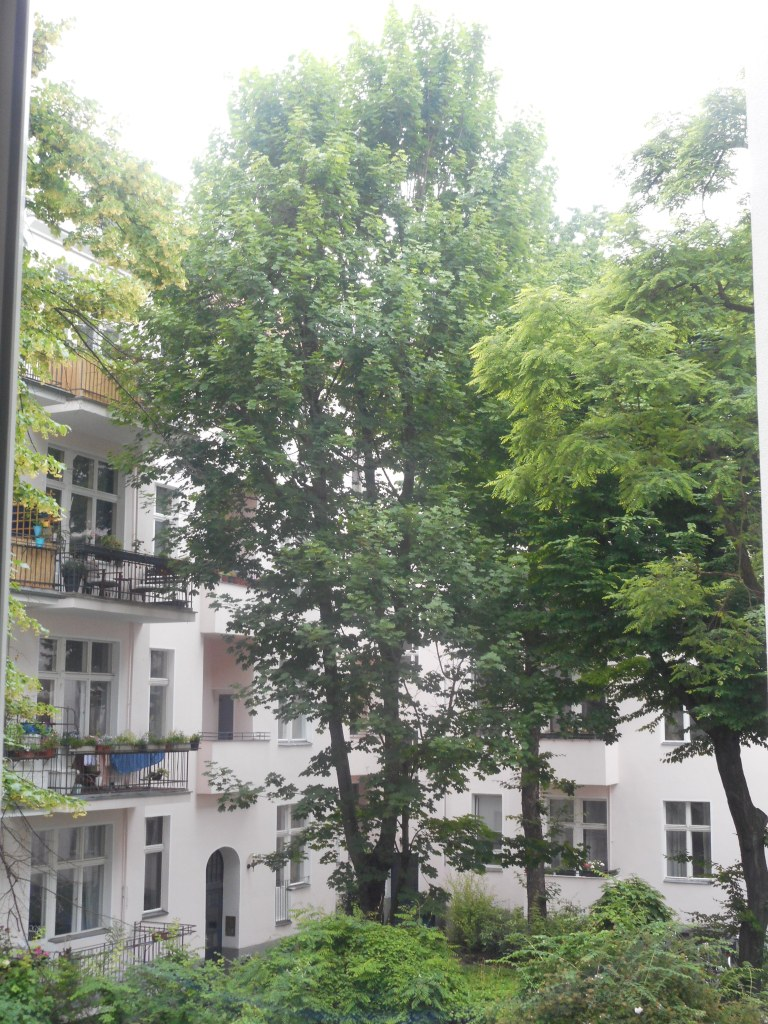 We were one floor above ground-level and had this view into a courtyard from our living-room window.