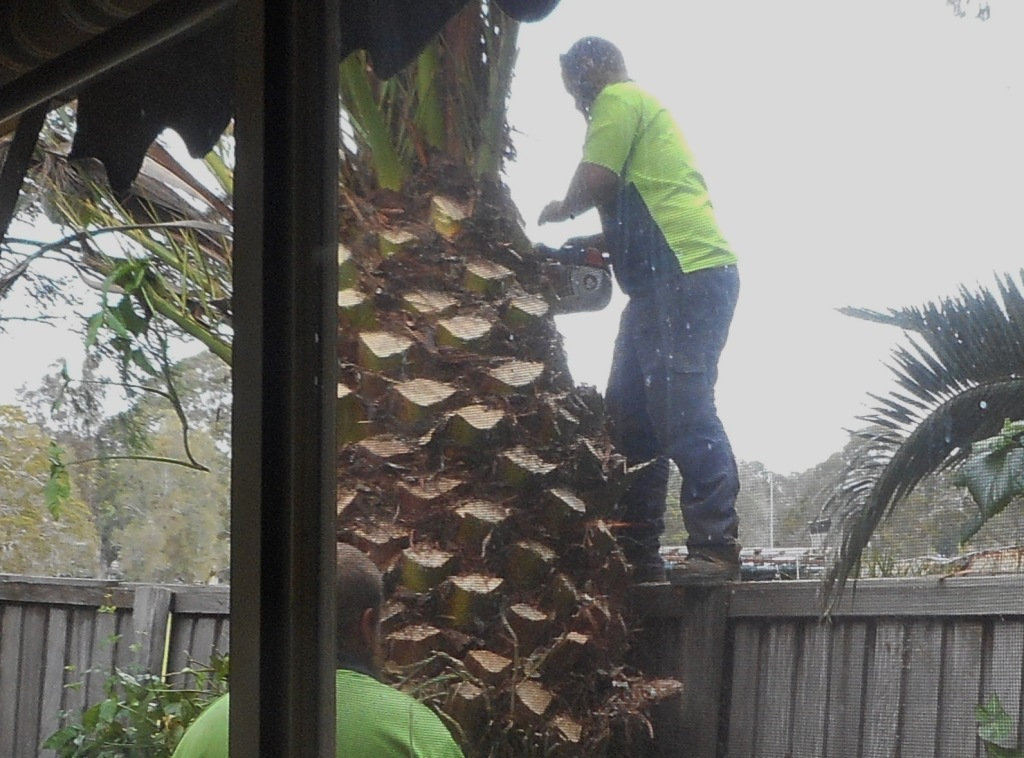 Man cutting the palm tree's trunk.