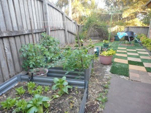 Attempting to establish a bit of a veg garden on the West side;
