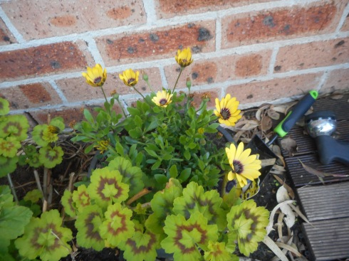 I am happy that some new yellow flowers appeared on the South side of our house.