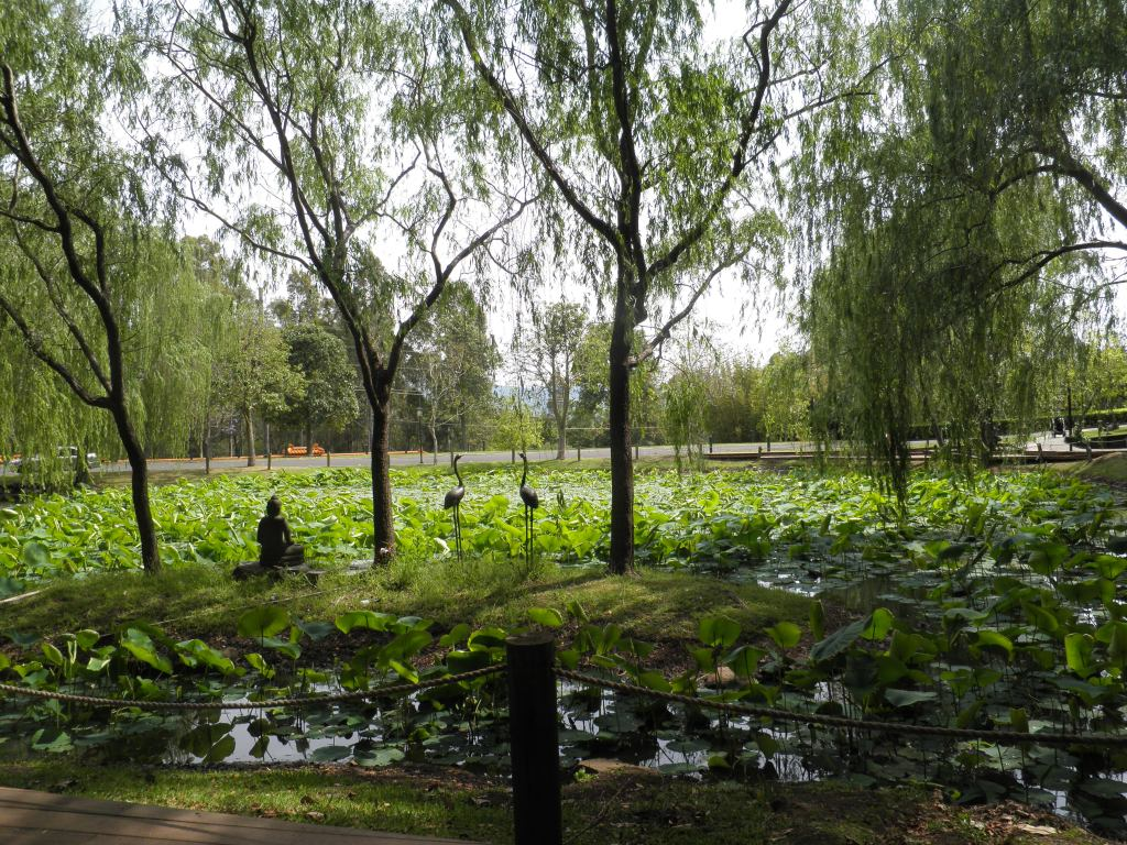 We strolled to the nearby Lotus Pond.